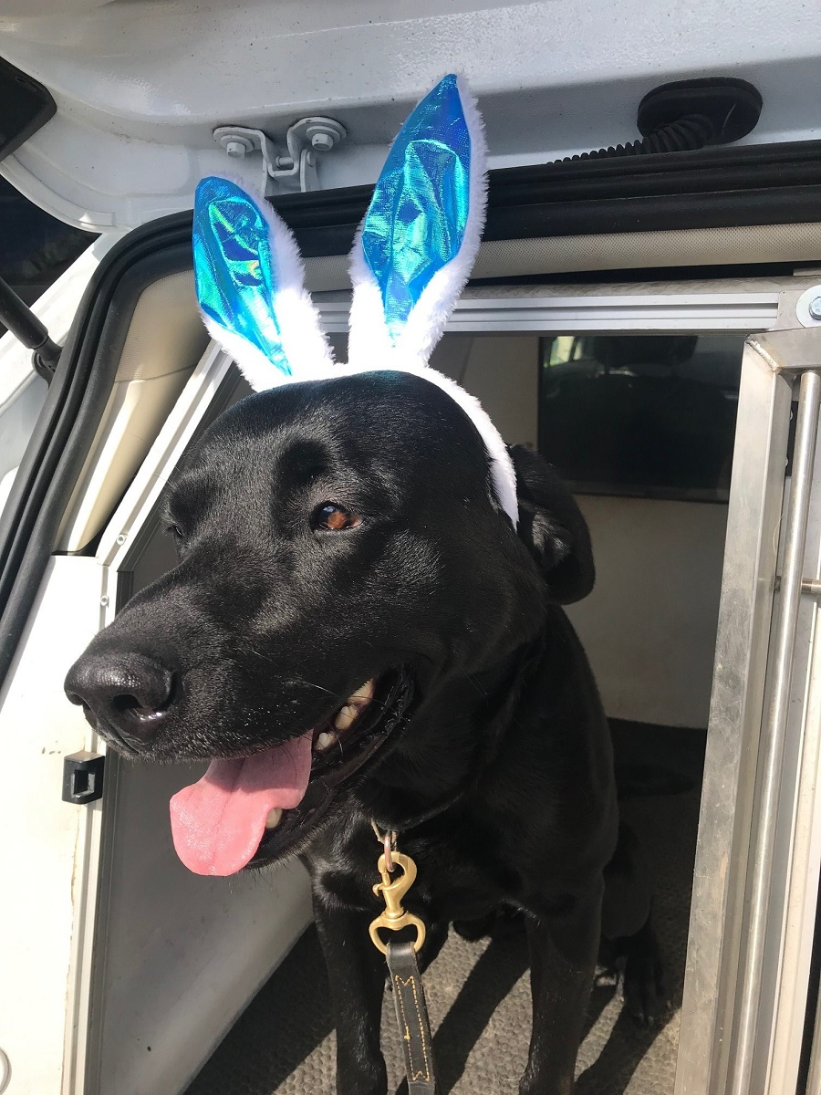 How cute does PD Milo look in his bunny ears?